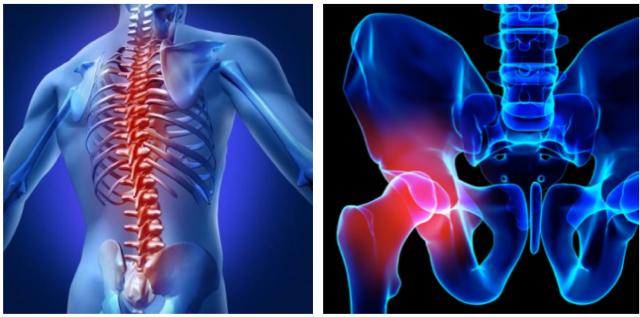 脊柱、股関節の図
